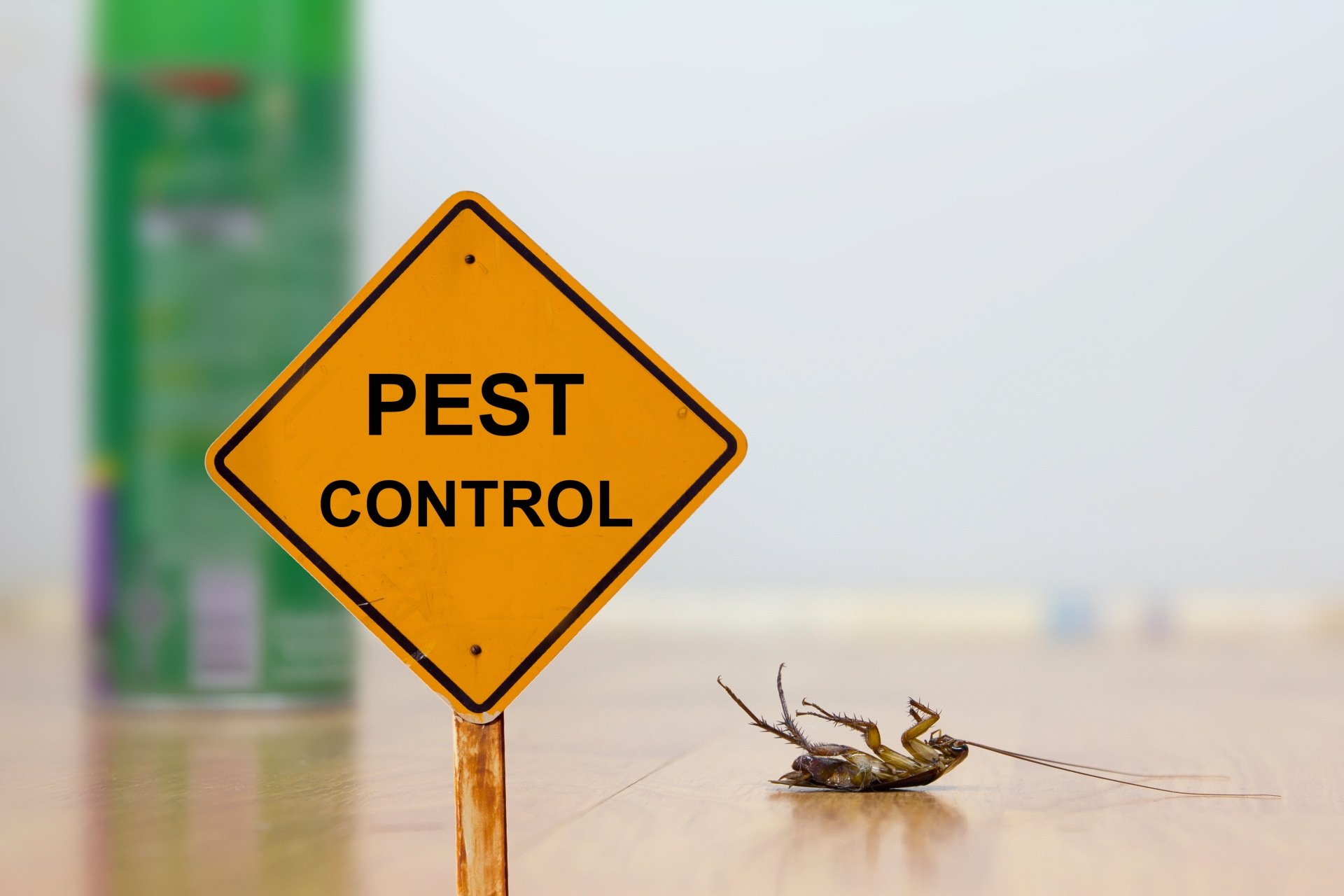 24 Hour Pest Control, Pest Control in Falconwood, Welling, DA16. Call Now 020 8166 9746